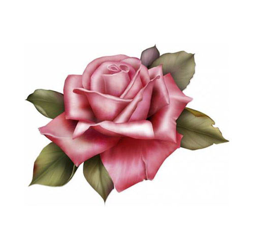 Rose - PNG image with transparent background