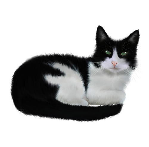 Black and White Cat - PNG image with transparent background