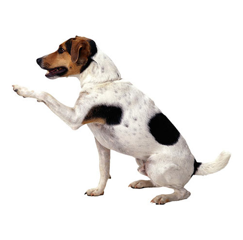 Dog - PNG image with transparent background